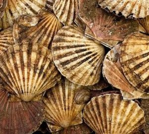 Some lovely scallops!