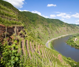 Vineyard slopes in the Mosel